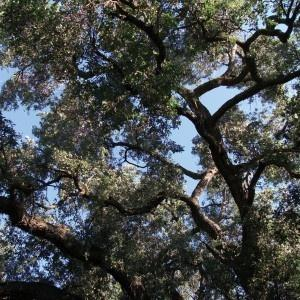Charles Manson  - TREES